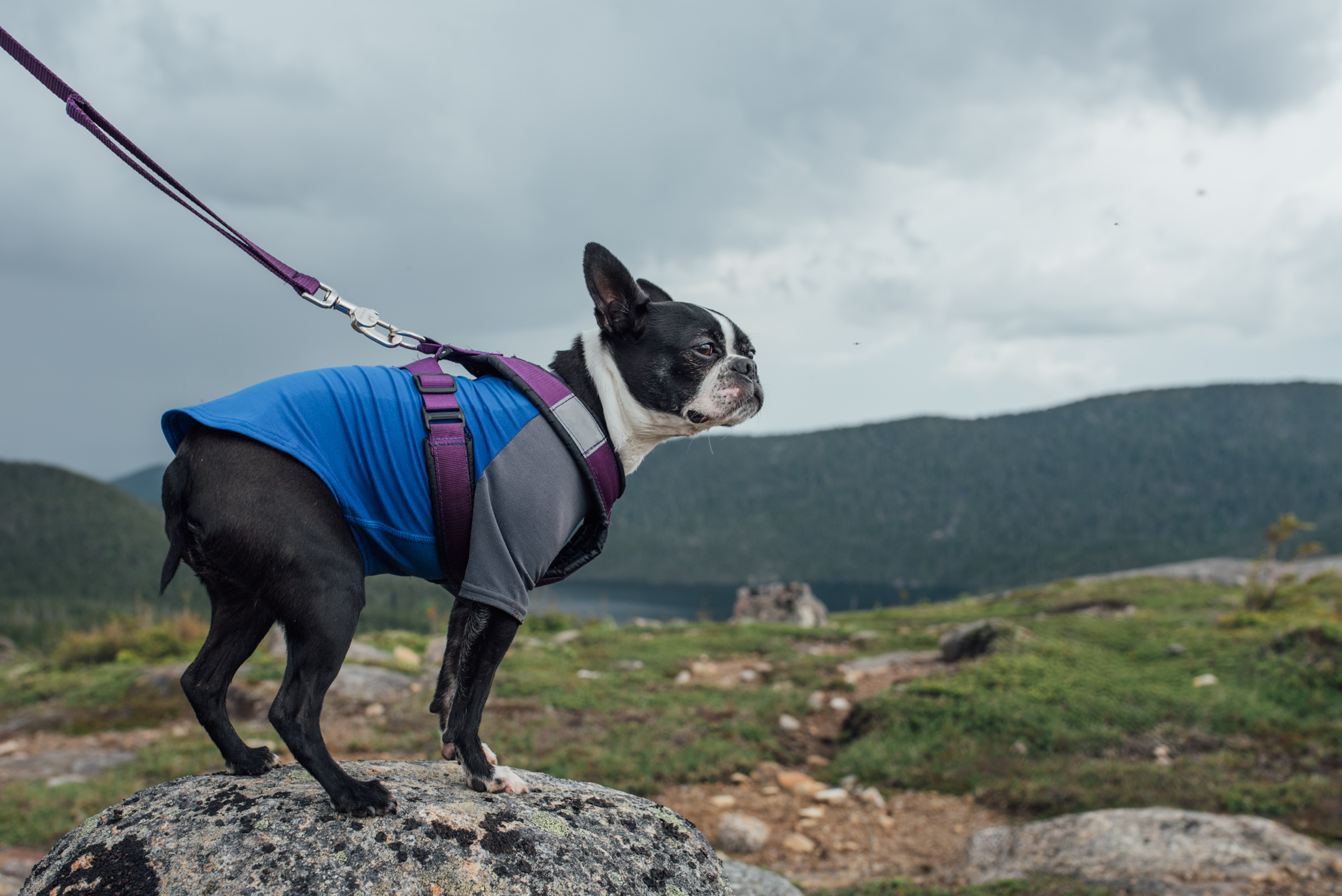 Tips for a successful hike with your dog