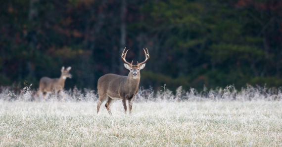 White-Tailed Deer Hunting