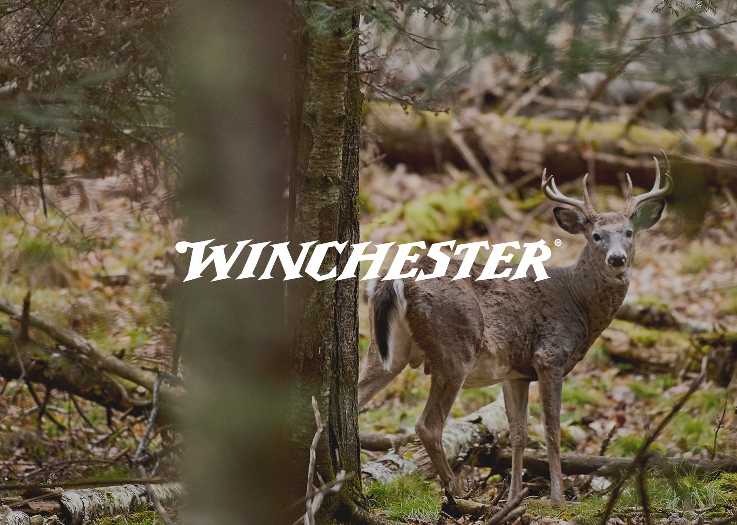 winchester-browning